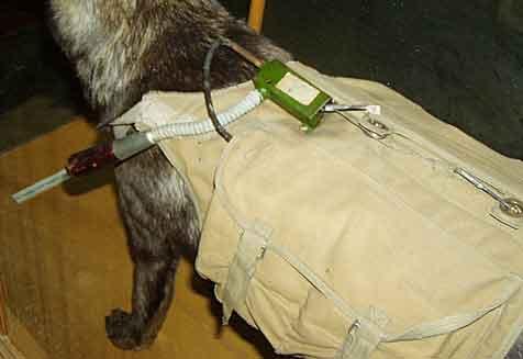 Сама мина проедставляла собой брезентовый вьюк, надеваемый на собаку.